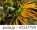 お花 フラワー 咲く花の写真 43147709