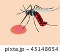蚊 43148654
