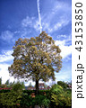 青空と大きな木 43153850