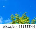 ナナカマド 自然 青空の写真 43155544