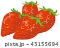 苺 ベクター 果物のイラスト 43155694