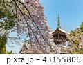 本法寺 和 寺の写真 43155806