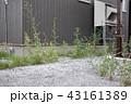 荒れた庭 43161389
