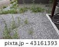 荒れた庭 43161393