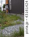 荒れた庭 43161424