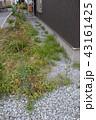 荒れた庭 43161425