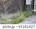 荒れた庭 43161427