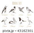 Birds set sketch.. 43162301