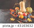 かぼちゃ カボチャ 南瓜の写真 43163632
