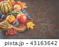 かぼちゃ カボチャ 南瓜の写真 43163642