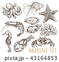 Marine animals collection  43164853