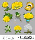 双葉 芽 花のイラスト 43168621