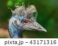 鳥 ポートレート 肖像の写真 43171316