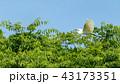 飛ぶチュウサギ 43173351