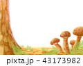 生えている松茸 43173982