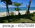 伊江ビーチ 43175589