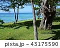 伊江ビーチ 43175590