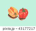 胡椒 コショウ ペッパーのイラスト 43177217