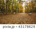 大阪城公園の紅葉 秋の大阪城 大阪観光 43178629