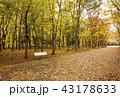 大阪城公園の紅葉 秋の大阪城 大阪観光 43178633