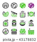 きゃべつ キャベツ 甘藍のイラスト 43178832