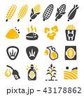 トウモロコシ コーン とうもろこしのイラスト 43178862