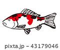 錦鯉 水彩画 43179046