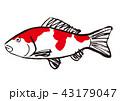 錦鯉 水彩画 43179047