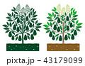 葉 葉っぱ 樹木のイラスト 43179099