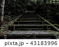 苔た階段 43183996