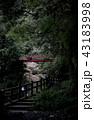 森の紅一点 43183998
