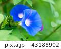 花 植物 咲くの写真 43188902