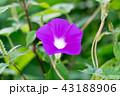 花 植物 咲くの写真 43188906