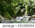 丹沢 沢 新緑の写真 43198304
