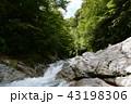 丹沢 沢 新緑の写真 43198306