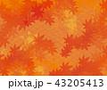 紅葉 モミジ 背景のイラスト 43205413
