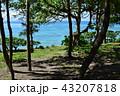 伊江ビーチ 43207818