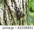カブトムシ 甲虫 幹の写真 43208891