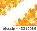 紅葉 モミジ 背景のイラスト 43210036