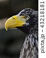 鷲 43218181