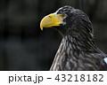 鷲 43218182