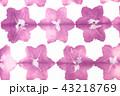 和紙 紫色の花イメージ 板締め染め 43218769