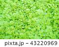 観葉植物 43220969