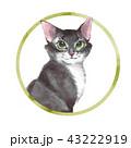 子猫 ねこ ネコのイラスト 43222919