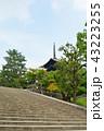 奈良 興福寺 五重塔の写真 43223255