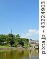 興福寺 五重塔 世界遺産の写真 43224903