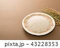 米 コシヒカリ 新米の写真 43228353