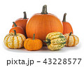 かぼちゃ カボチャ 南瓜の写真 43228577
