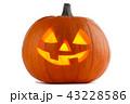 かぼちゃ カボチャ 南瓜の写真 43228586
