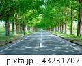 滋賀県 メタセコイア並木 43231707